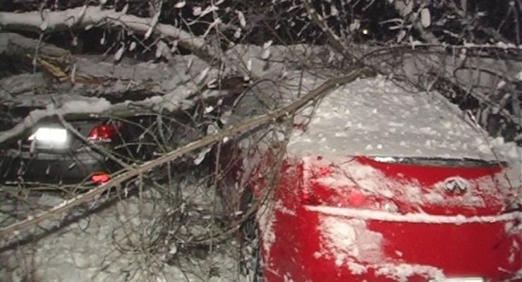 В Киеве деревья массово падают и крушат автомобили