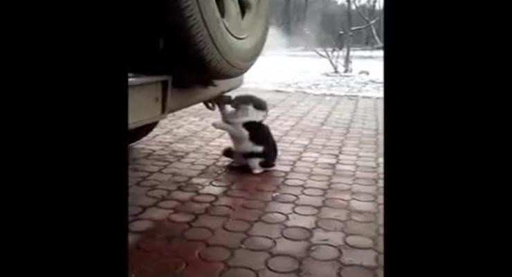 Кот-токсикоман облюбовал выхлопную трубу
