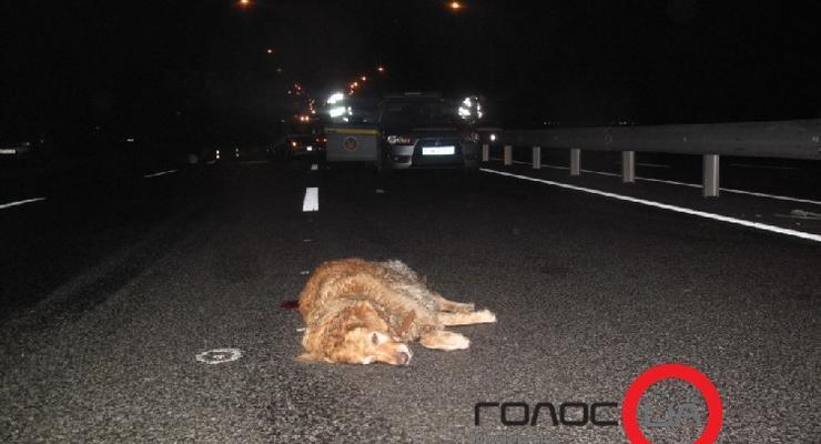 Киевлянин спасал собаку на дороге и остался без руки