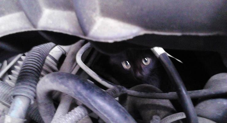 Спасатели просят изменить конструкцию Lada Kalina из-за кошек