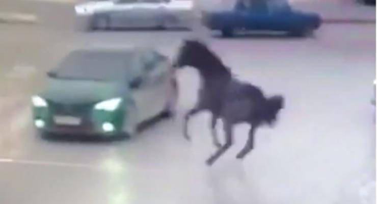 Обычное ДТП: Появилось видео, как в Чечне лошадь галопом влетела в Toyota