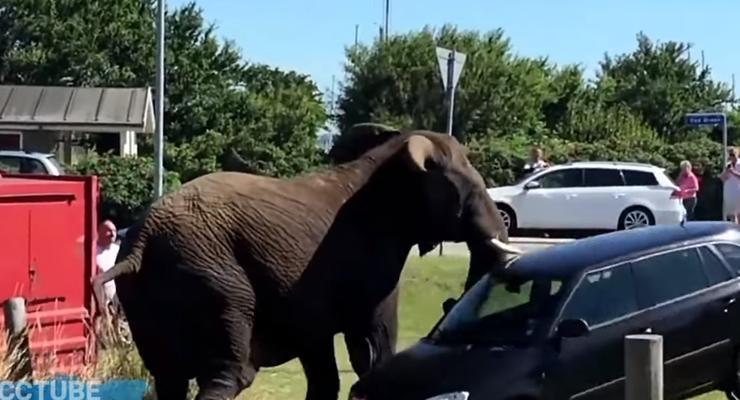 Дикие животные нападают на автомобили: Пятничная автоподборка #37