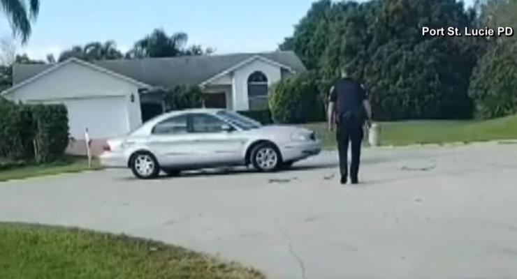 Собака сама включила заднюю передачу и гоняла по кругу в авто