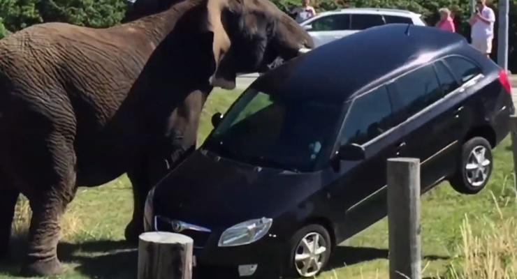 Животные разбивают машины: Пятничная подборка #44
