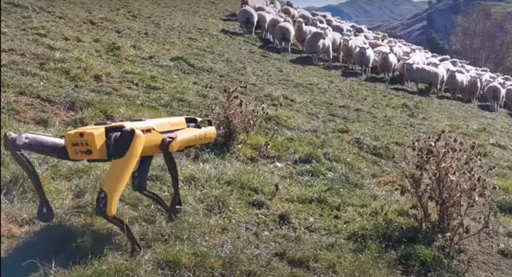 """""""Пастухи будущего"""": В США учат робота пасти овец"""